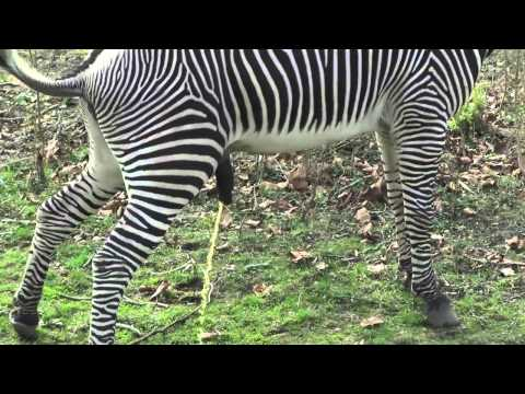 The Detroit Zoo