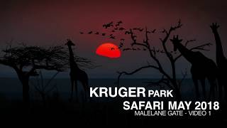 Kruger Park Safari - South Africa - Video  1