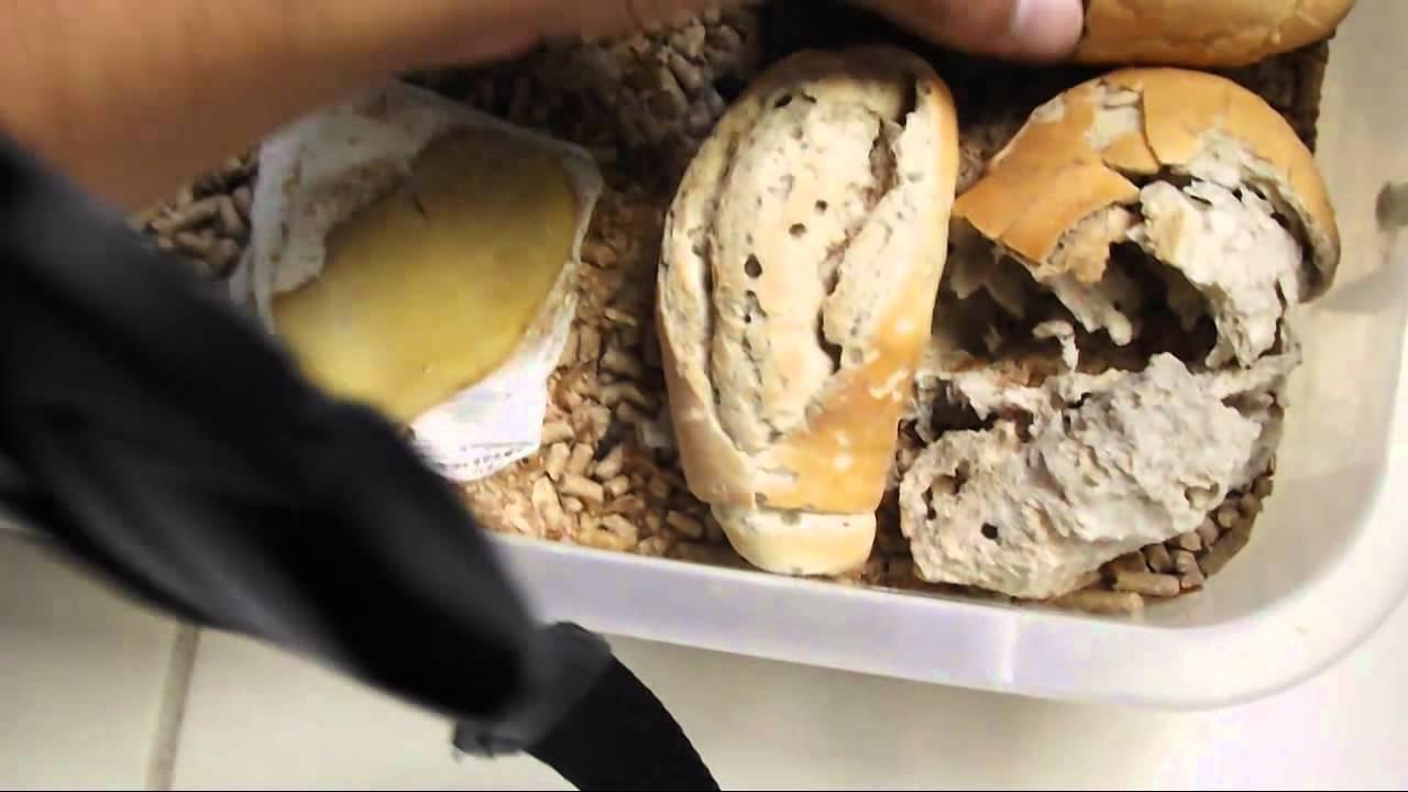 Como criar tenebrio e besoruo do amendoin part 1 youtube for Como criar caracoles de jardin