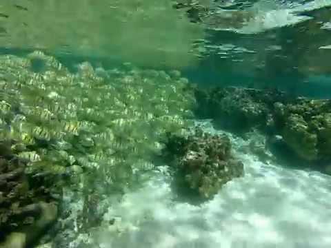 Snorkeling in Taha