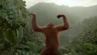 Мы отвисаем как обезьяны в джунглях T killah