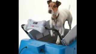 Dogtread Pz-1701k Small Dog Treadmill - With K9 Fitness Program