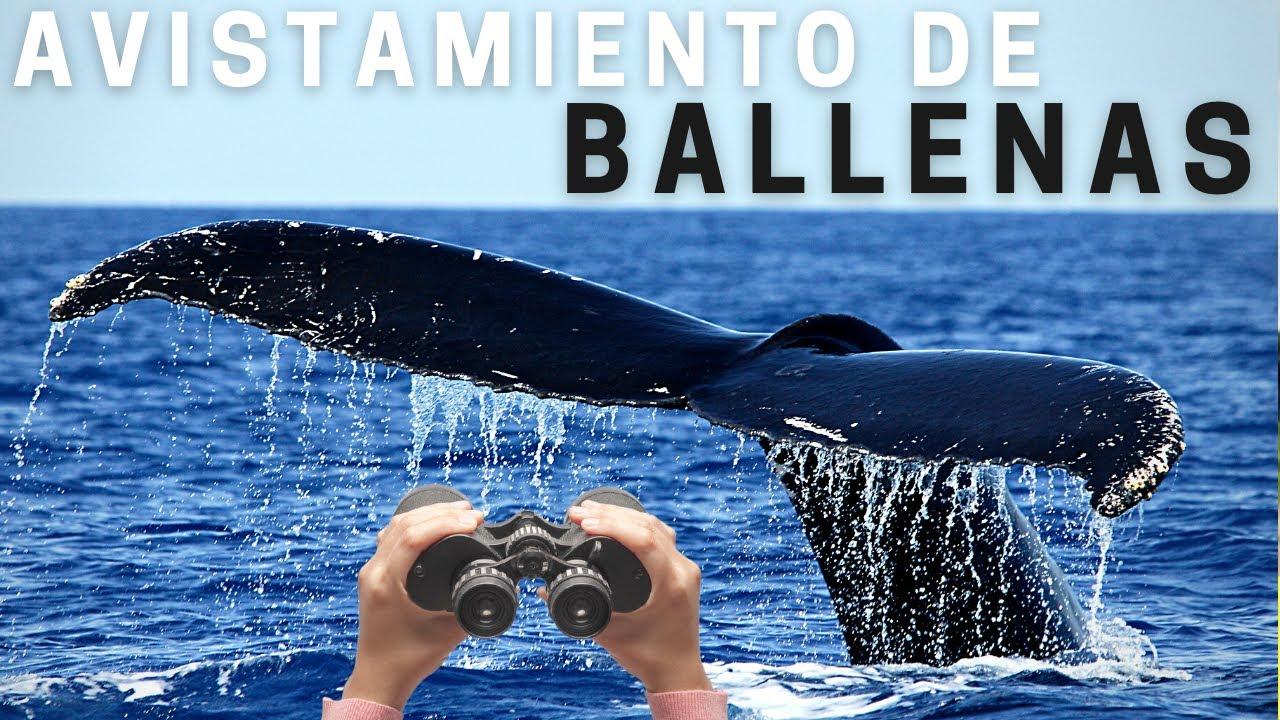 🐋  Avistamiento de BALLENAS en COLOMBIA (ENSENADA de UTRIA) ✔️ BAHIA SOLANO