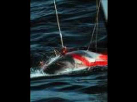 SAY NO TO WHALING
