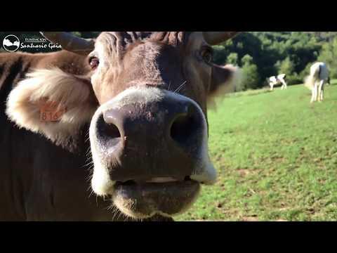 ¿Donde van estos vacas, toros y yeguas cada mañana?