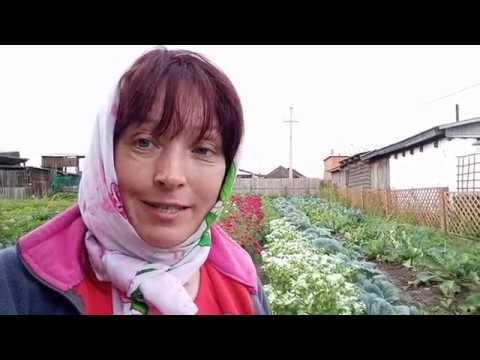 Ломаем печку , заготавливаю семена ,  покупаю цветы