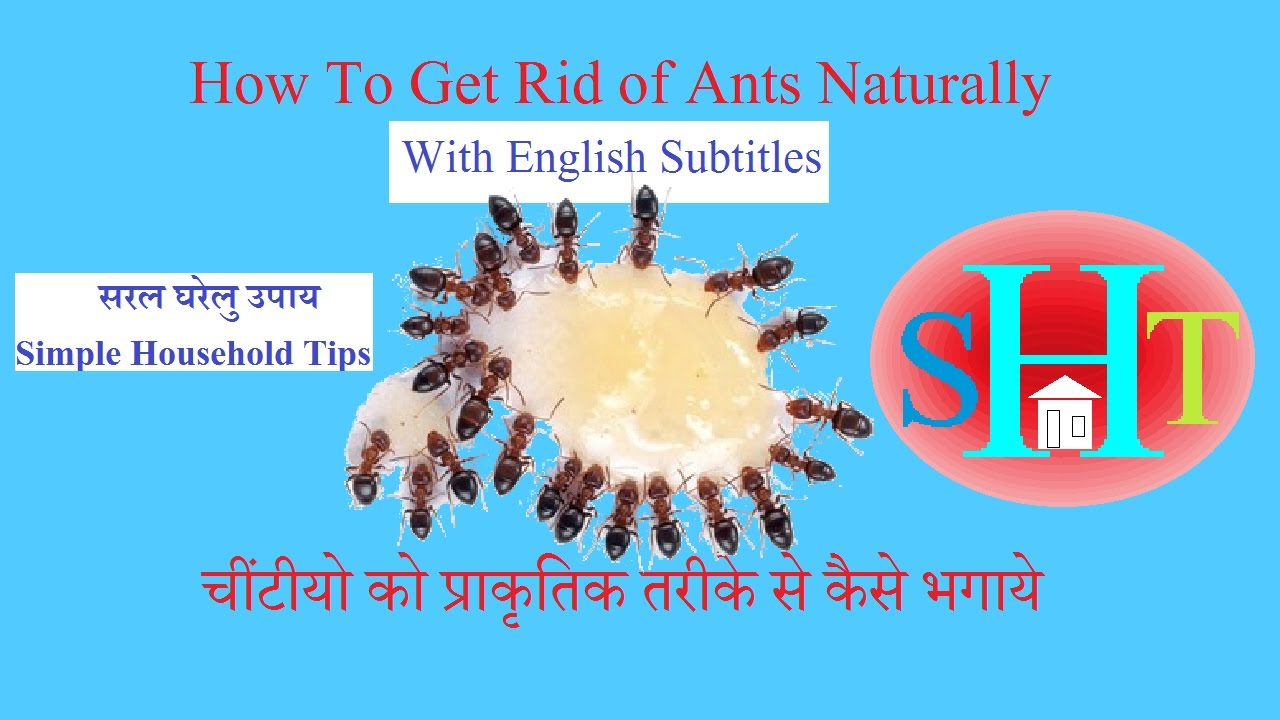 How To Get Rid of Ants {HINDI} - YouTube