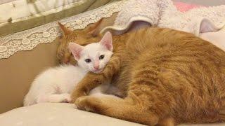 ちゃんと弟「けん」も可愛がっている「ひろし」。 弟の表情が良い〜〜。...