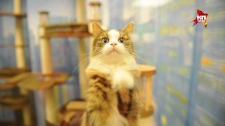 Театр кошек Юрия Куклачева отмечает 25-летний юбилей