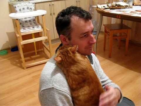 If You Need A Hug Today Then Watch This Cat Give An Adorable Cuddle