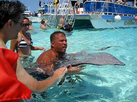 Stingray City- Grand Cayman Island