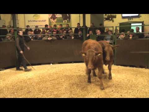 Darlington Mart - Prize Show and Sale of Store Cattle - Monday 17th November 2014