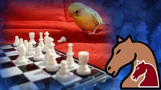 maxresdefault Chess Engine With Java