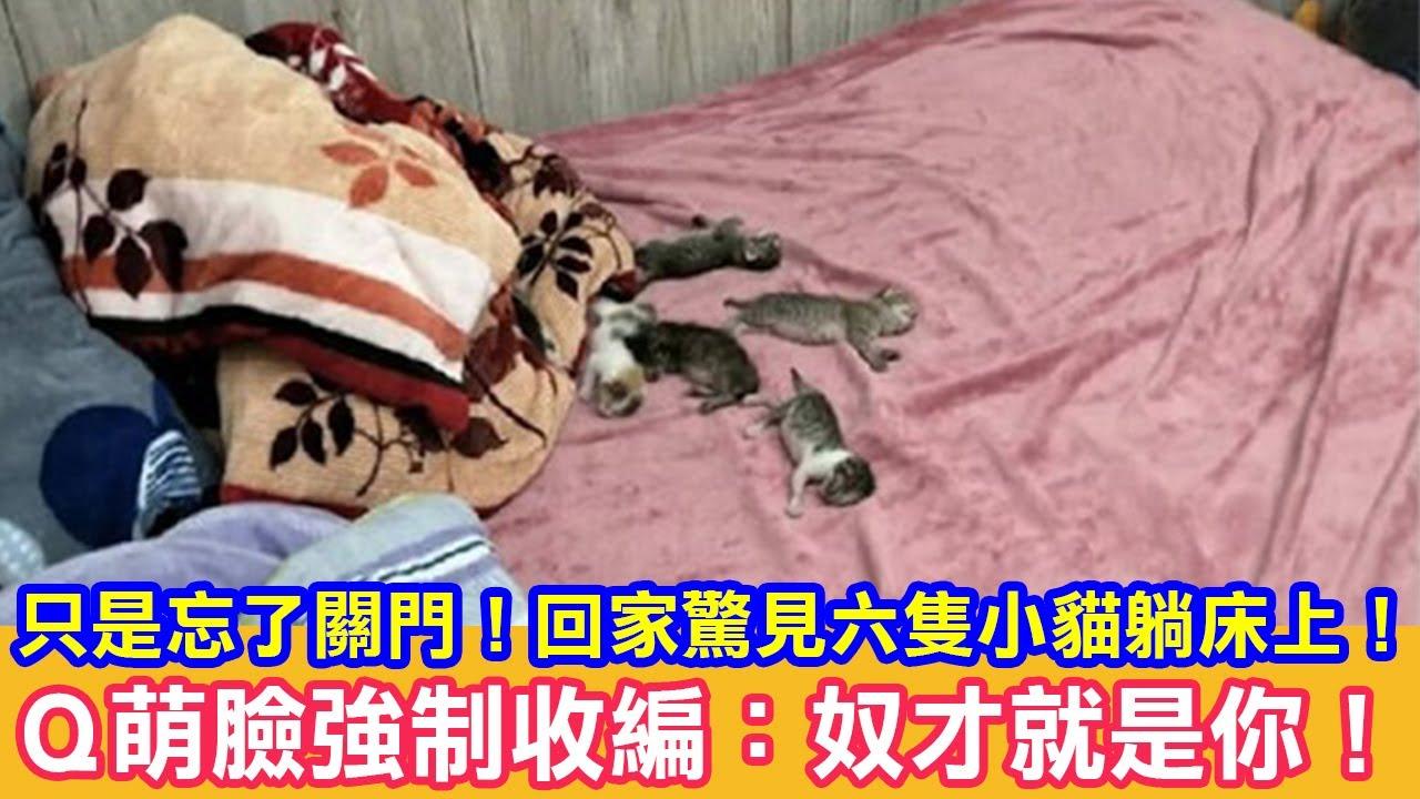 只是忘了關門!回家驚見六隻小貓躺床上!Q萌臉強制收編:奴才就是你! 貓咪搞笑