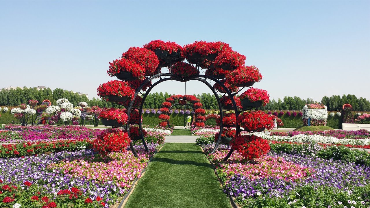 Miracle Garden Dubai Entry Fee Youtube
