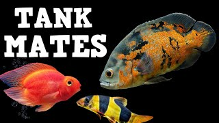 TOP 10 Tank Mates For Oscar Fish!