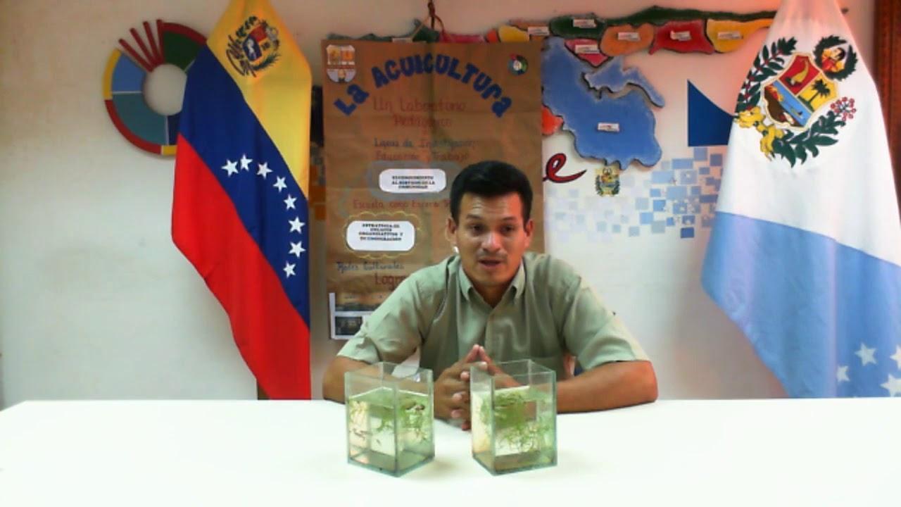 Antonio garcia reproducci n de peces ornamentales youtube for Reproduccion de peces ornamentales
