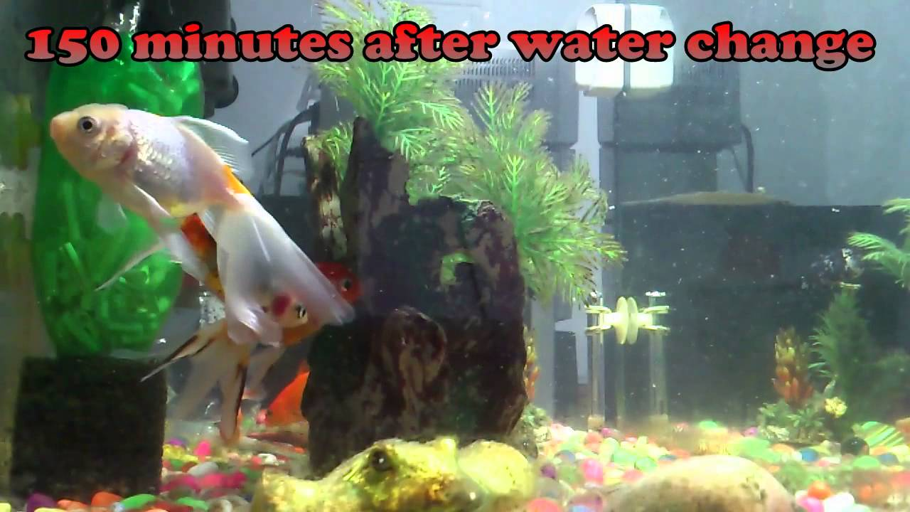 Water bottle filter efficiency fish tank after water for How to keep fish tank clean without changing water
