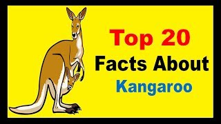 The Greatest Kangaroo Characters Of All Time