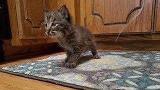 Садовник подобрал одинокого котёнка, но вскоре понял, что он не тот, кем кажется