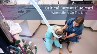 Critical Care at BluePearl