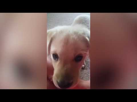 Funniest Cutest Puppy Home Video Bloopers of 2016 Weekly Compilation   Funny Pet Videos