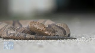 A Venomous Snake Just Bit You! Now What?