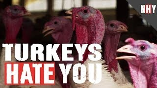 TURKEYS HATE YOU!