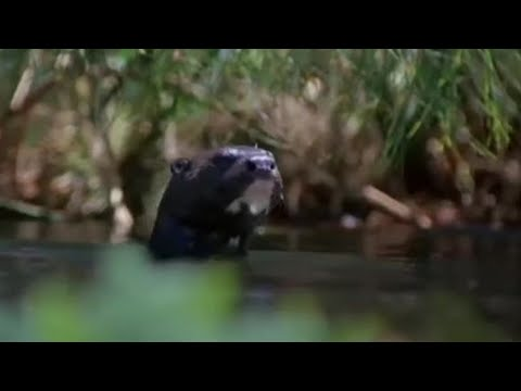 Animals on the wetlands of the Nile - BBC