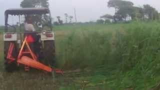 Green Fodder Cutter in farm