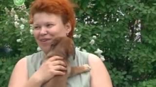 Приют для бездомных животных общественной организации «В добрые руки»