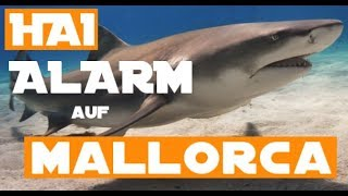 Hai ALARM am Mittelmeer - Weisser Hai bei Mallorca gesichtet
