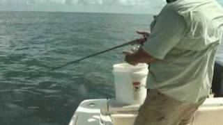 Yellowtail 101 in the Florida Keys 1