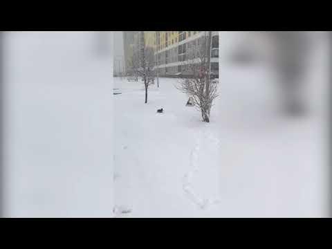 В Екатеринбурге сняли на видео утку, которая растерялась из за возвращения зимы