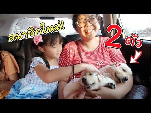 ซื้อลูกหมา!! โกลเด้น รีทรีฟเวอร์ 2 ตัว มาเป็นสมาชิกใหม่!   แม่ปูเป้ เฌอแตม Tam Story