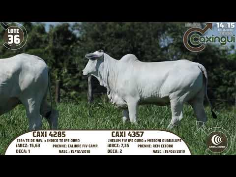 LOTE 36   CAXI 4357, CAXI 4285