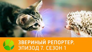 Звериный репортер  Эпизод 7  Сезон 1