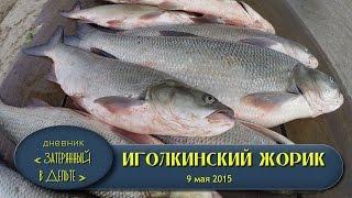 Ловля жереха. Астраханская рыбалка, дельта Волги.