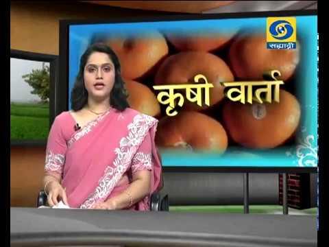 Krishivarta Bajarbhav - 24 May 2018 - कृषीवार्ता बाजारभाव