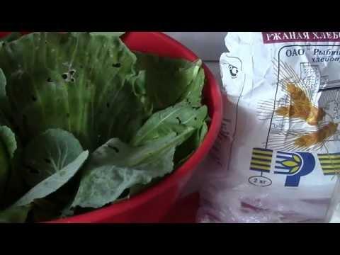 Заготовки на зиму  Крошево(квашеные зеленые листья капусты)  для серых щей