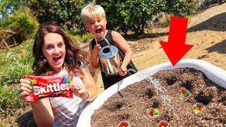 Planting Magic Candy Seeds from Candytopia! (WHAT HAPPENS?)