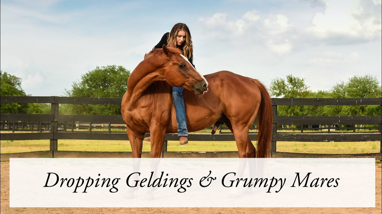 Dropping Geldings & Grumpy Mares