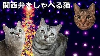 関西 弁 猫 しゃべる 関西弁をしゃべる猫!?|ペットものがたり