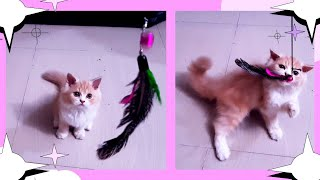 cats playing birds feather
