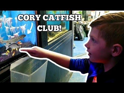 ADDING NEW FISH TO THE CORY CATFISH CLUB!