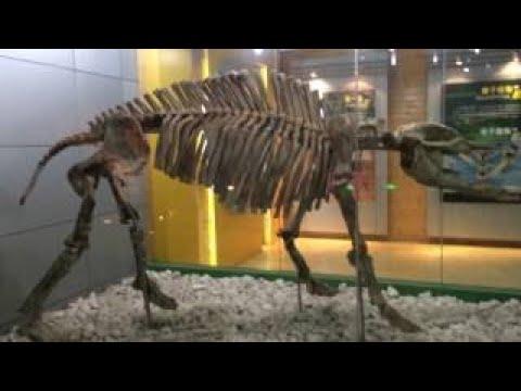 Beijing Museum of Natural History Beijing China (1)