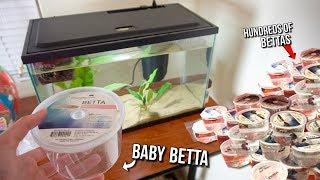CUTE BABY BETTA FISH SHOPPING SPREE!! NEW Baby BETTA FISH