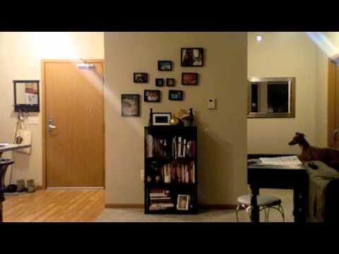 Italian Greyhound Home Alone