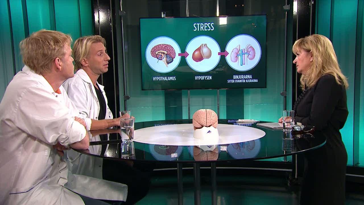Så reagerar hjärnan och kroppen på stress - Malou Efter tio (TV4)
