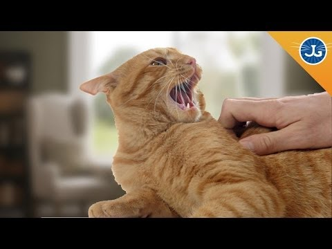 Thumbnail: You're Petting Your Cat All Wrong!